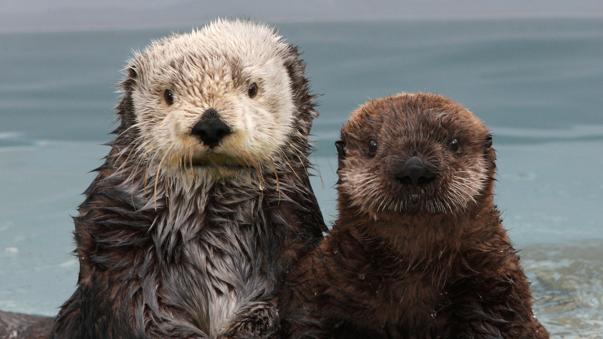 Southern Sea Otter Photo Gallery