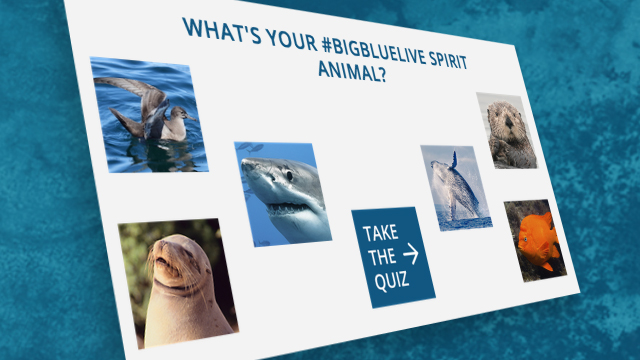 What's Your Big Blue Live Spirit Animal?