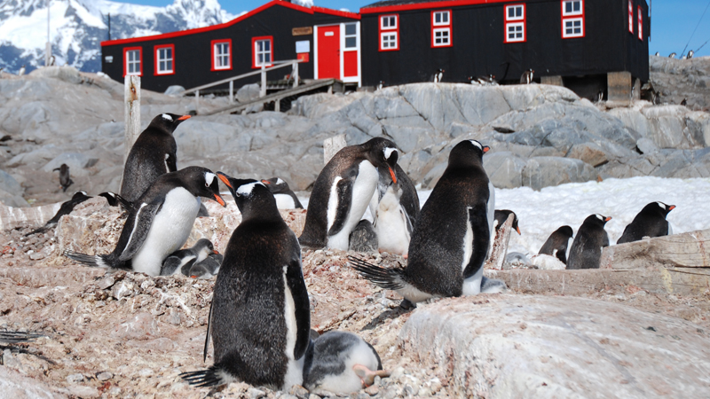 Nature: Penguin Post Office