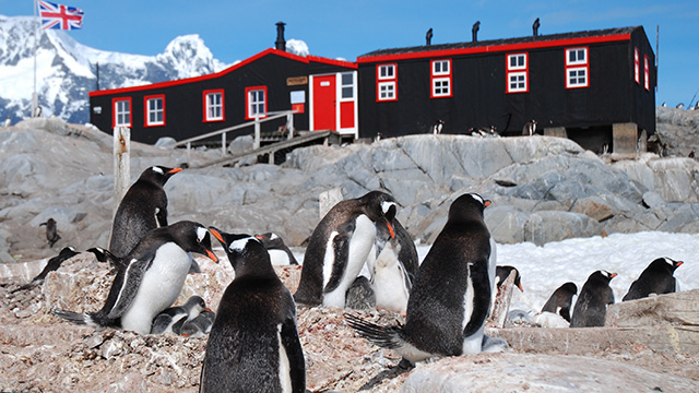 TONIGHT at 8 p.m. - NATURE: Penguin Post Office