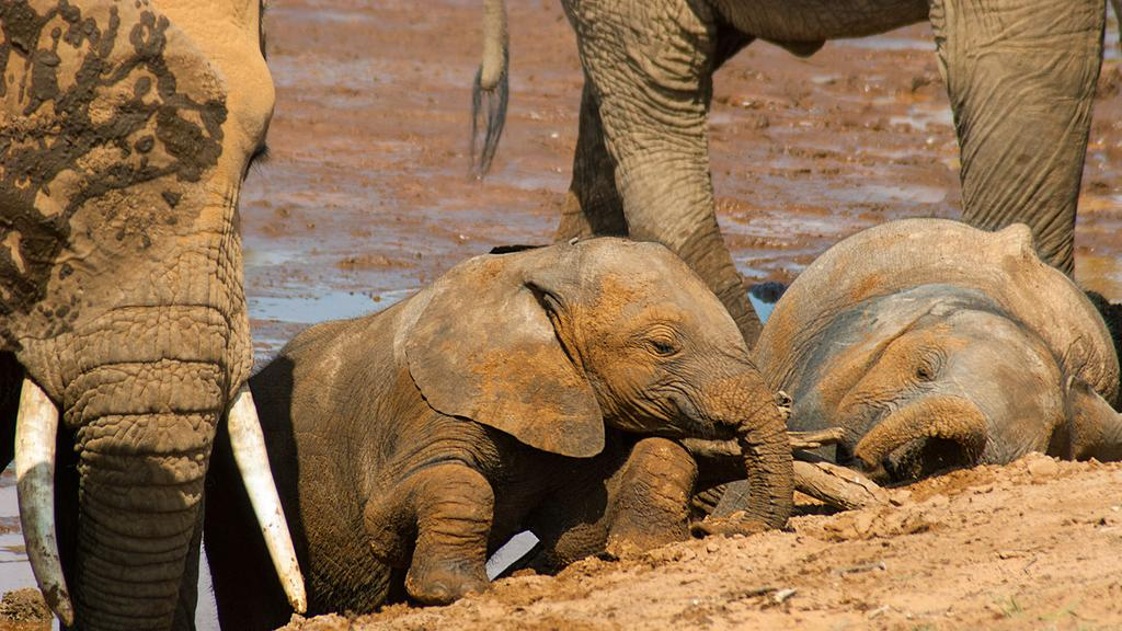 Natures Great Race: Elephants