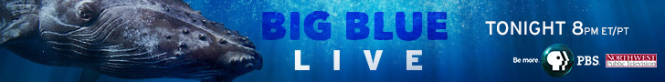 BigBlueLiveTonight