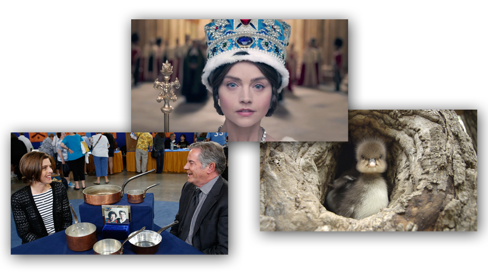 Victoria on Masterpiece, Nature, and Antiques Roadshow