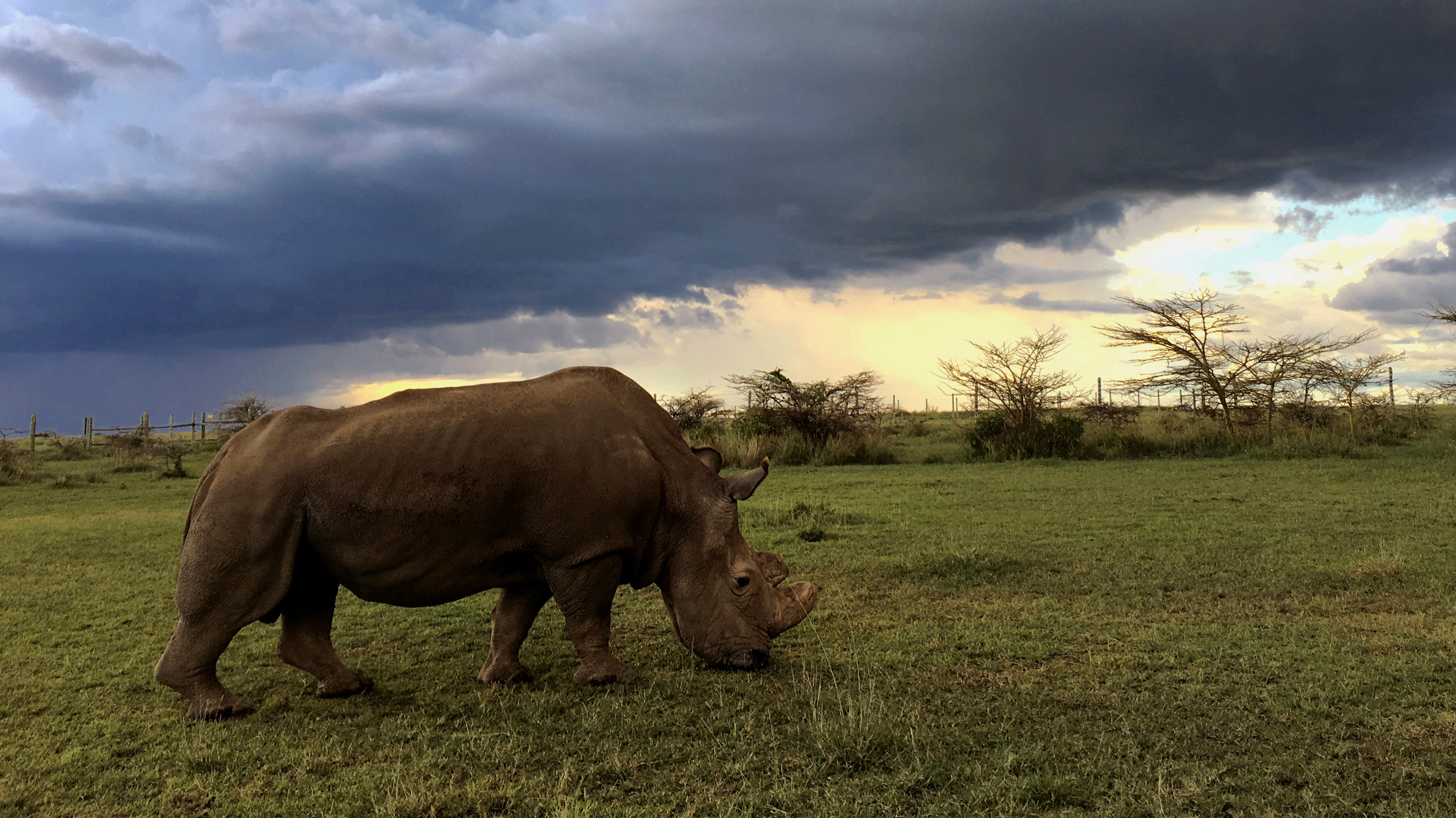 Nature: The Last Rhino
