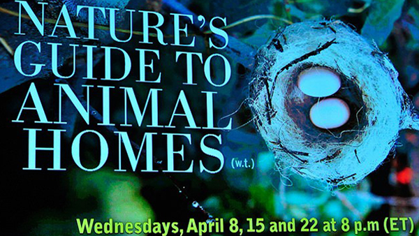 Nature's Guide to Animal Homes