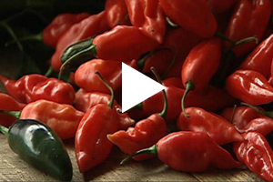 Watch From Farm to Table On Demand