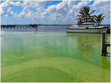 Toxic Algae: Complex Sources and Solutions
