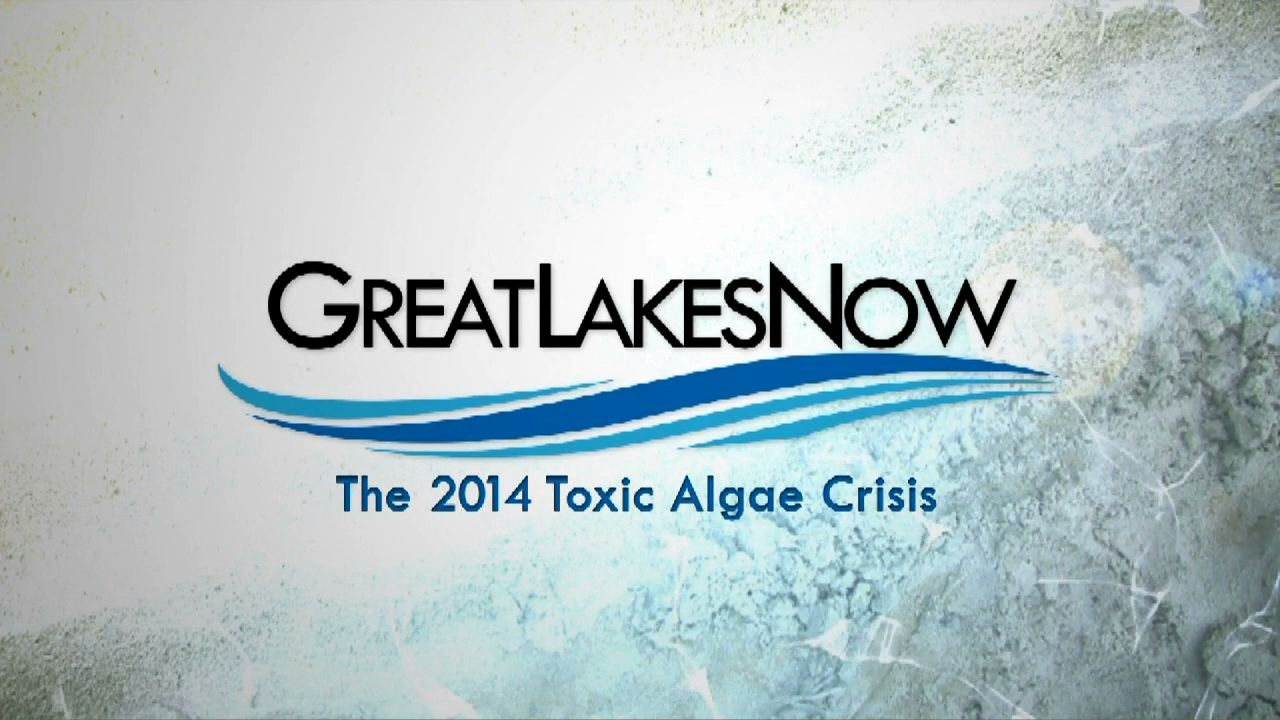The 2014 Algae Crisis - Part II