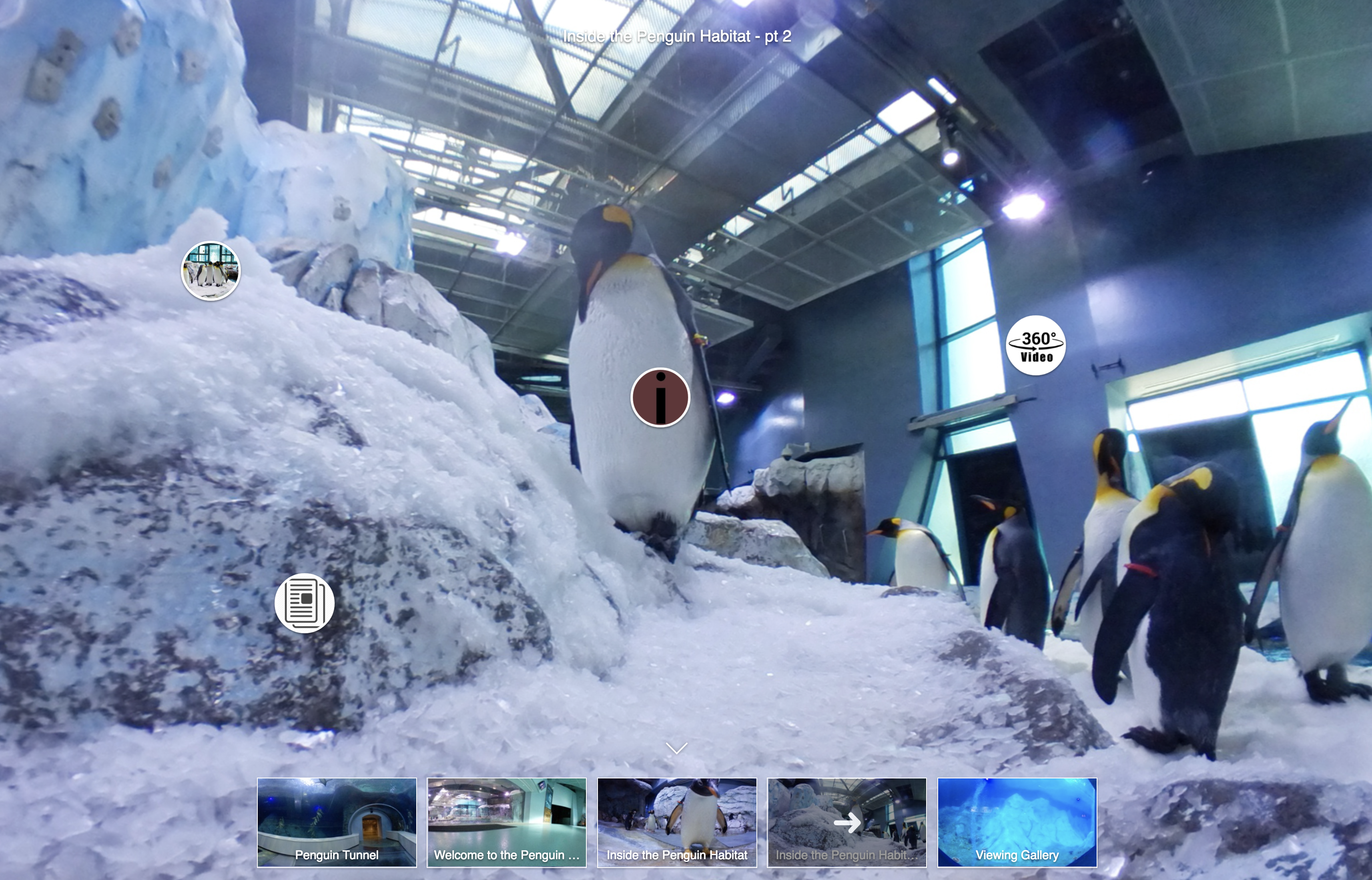 PENGUINS 360° EXPERIENCE
