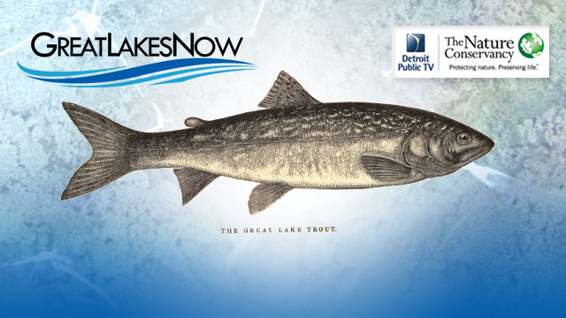 Great Lakes Now Connect: Fisheries