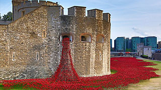 How Poppies Became the Symbol of Remembrance