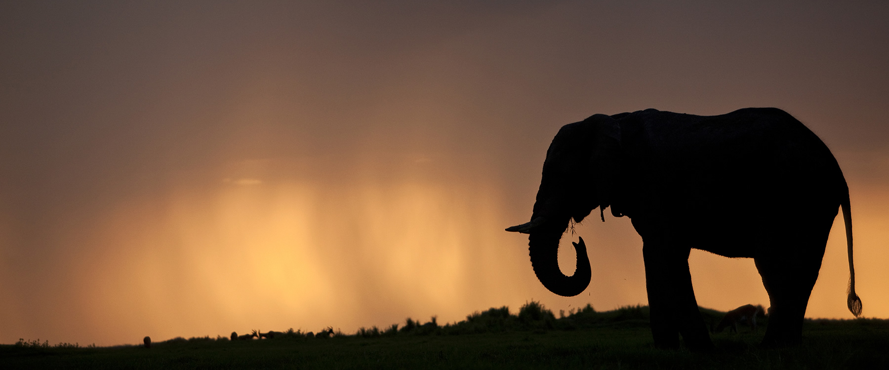 Silhouette of elephant against a sunset sky