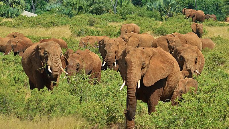 Nature's Great Race  | Elephants ~ Monday at 9pm