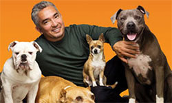 "CESAR MILLAN, ""LEADER OF THE PACK"" LIVE"