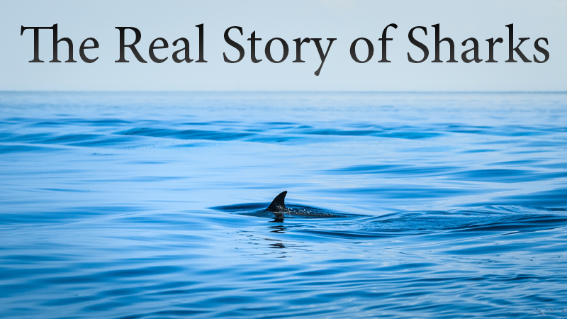 The Real Story of Sharks