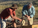 In the Karoo Basin of South Africa, Roger Smith, left, and Neil Shubin inspect a fossil of gorgonopsid, a predator from the Permian period.