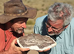 Roger Smith, left, and Neil Shubin examine a fossil of two juvenile <em>Thrinaxodon</em> — mammal-like reptiles that survived the Permian extinction.