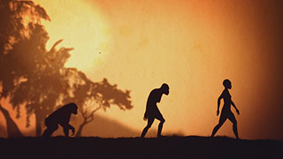 silhouettes of ape, ancient homonid, and modern human