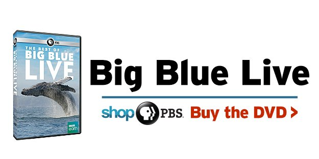 The Best of Big Blue Live on DVD