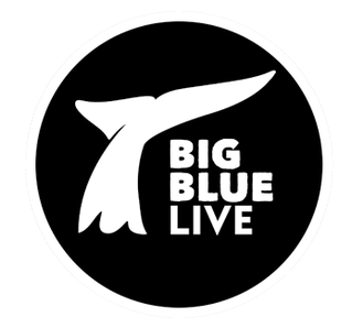 BigBlueLive Stream.png