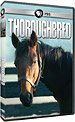 Shop PBS — Thoroughbred: Born to Run (DVD)
